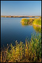 Wahluke Ponds, Hanford Reach National Monument. Washington ( color)