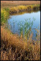 Shore detail with reeds, Wahluke Ponds, Hanford Reach National Monument. Washington ( color)