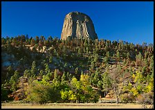 Devil's Tower rising above forested slope. Wyoming, USA ( color)