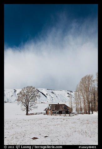 Historic house and bare cottonwoods in winter. Jackson, Wyoming, USA (color)