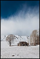 Historic house and bare cottonwoods in winter. Jackson, Wyoming, USA