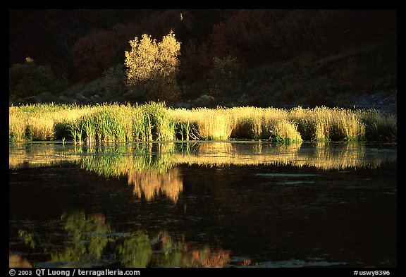 Grasses along the Snake River in late afternoon light. Wyoming, USA (color)