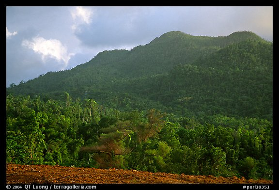 Forest-covered hill. Puerto Rico (color)