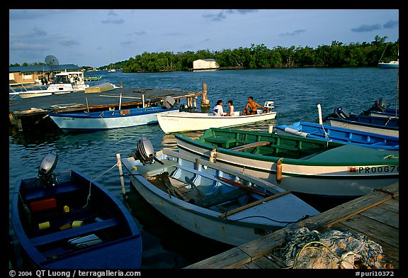 Small boats on a mangrove-covered cost, La Parguera. Puerto Rico