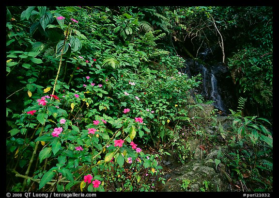 Flowers, lush foliage, and waterfall in rain forest, El Yunque, Carribean National Forest. Puerto Rico (color)