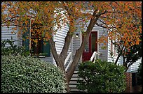 Tree in fall color and house. Montgomery, Alabama, USA ( color)