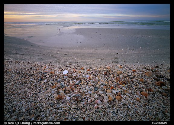 Beach covered with sea shells, sand dollar, shore bird, sunrise. USA (color)