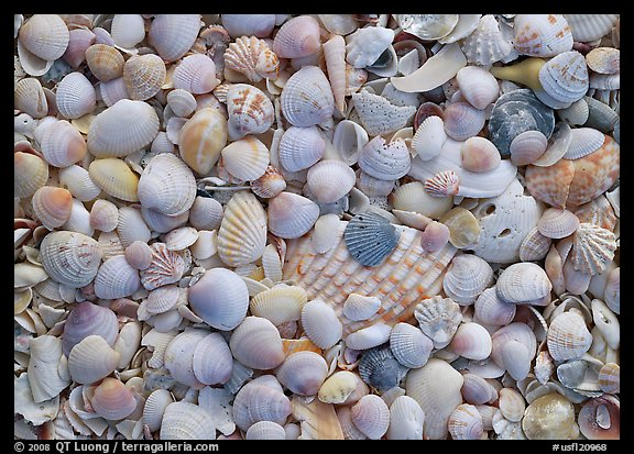 Close-up of shells with pastel colors, Sanibel Island. USA (color)