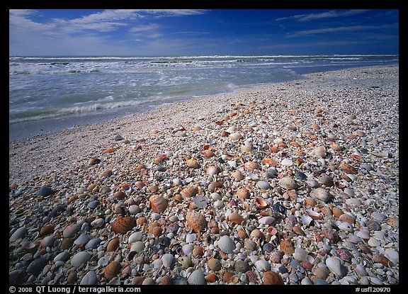 Sanibel Island Shells: Picture/Photo: Beach Covered With Sea Shells, Sunrise