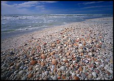Beach covered with sea shells, sunrise, Sanibel Island. Florida, USA