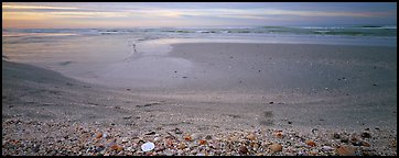 Beach seascape with seashells, dawn, Sanibel Island. Florida, USA (Panoramic color)