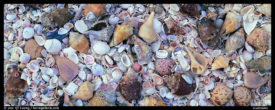 Beach close-up with seashells, Sanibel Island. Florida, USA (color)