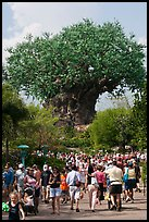 The Tree of Life, centerpiece of Animal Kingdom Theme Park. Orlando, Florida, USA ( color)