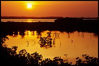 Sun setting over mangrove coast. The Keys, Florida, USA ( color)