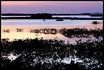 Mangroves at dusk, Cudjoe Key. The Keys, Florida, USA ( color)