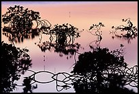 Detail of mangrove shapes, Cudjoe Key. The Keys, Florida, USA ( color)