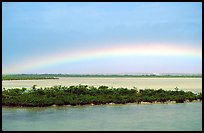 Rainbow above mangroves, Key West. The Keys, Florida, USA