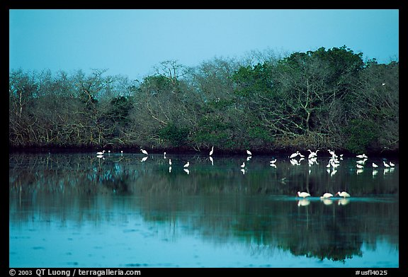 Pond with wading birds, Ding Darling NWR, Sanibel Island. Florida, USA (color)