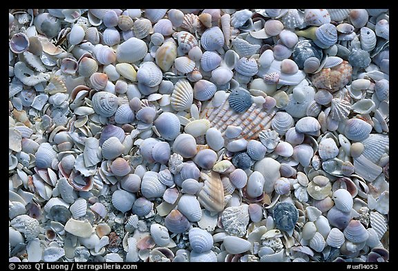 Shells washed on shore, Sanibel Island. Florida, USA (color)