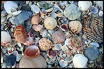 Shells close-up, Sanibel Island. Florida, USA (color)