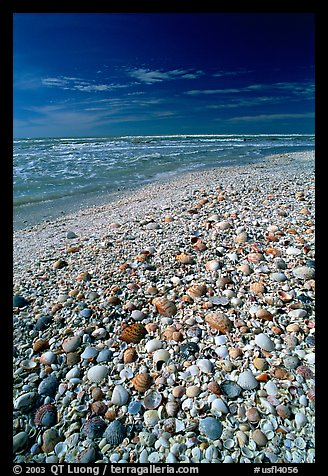 Beach covered with sea shells, mid-day, Sanibel Island. Florida, USA (color)