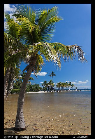 Palm trees and pond,  Matheson Hammock Park, Coral Gables. Florida, USA (color)