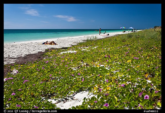 Dune vegetation, Sandspur Beach, Bahia Honda State Park. The Keys, Florida, USA (color)