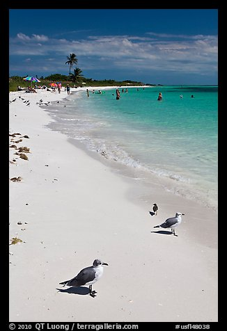 Seabirds, Sandspur Beach, Bahia Honda State Park. The Keys, Florida, USA (color)