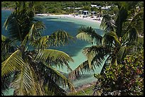 Beach seen from above through palm trees, Bahia Honda Key. The Keys, Florida, USA ( color)