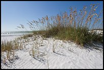 White sand beach with grasses, Fort De Soto Park. Florida, USA ( color)