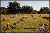 Cemetery. Orlando, Florida, USA ( color)