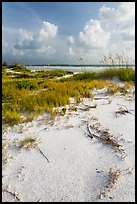 White sand, vegetation, Fort De Soto beach. Florida, USA ( color)