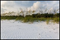 Rippled white sand and grasses, Fort De Soto beach. Florida, USA ( color)