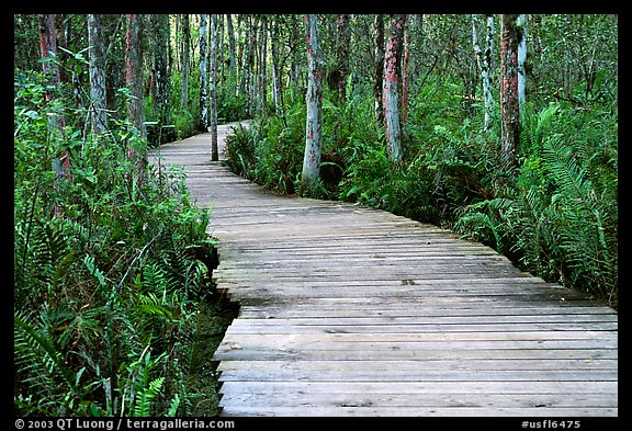 Boardwalk, Loxahatchee NWR. Florida, USA (color)