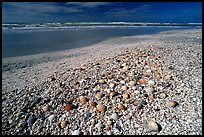Beach covered with sea shells, sunrise. Sanibel Island, Florida, USA