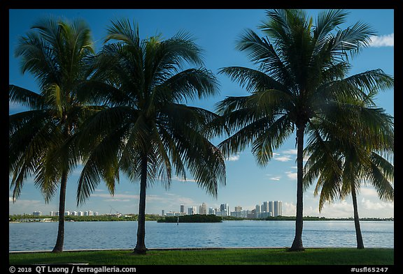 Palm trees, Biscayne Bay, distant skyline. Florida, USA (color)