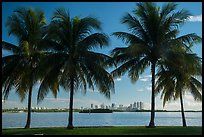 Palm trees, Biscayne Bay, distant skyline. Florida, USA ( color)