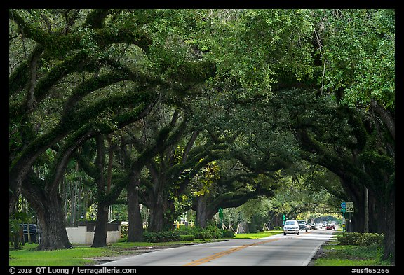 Road through tree tunnel. Coral Gables, Florida, USA (color)
