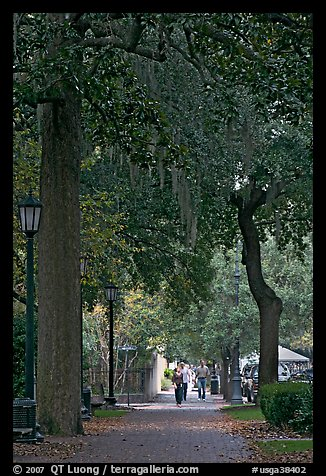 Street lined with oak trees and Spanish moss. Savannah, Georgia, USA (color)