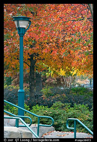 Lamp and autumn colors, Centenial Olympic Park. Atlanta, Georgia, USA (color)