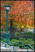 Lamp and autumn colors, Centenial Olympic Park. Atlanta, Georgia, USA