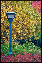 Blue lamp and trees in fall foliage, Centenial Olympic Park. Atlanta, Georgia, USA