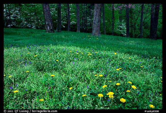 Spring wildflowers, grasses, and trees, Bernheim arboretum. Kentucky, USA