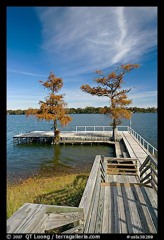 Deck and bald cypress on Lake Providence. Louisiana, USA (color)