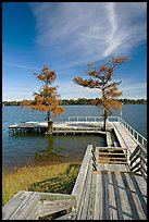 Deck and bald cypress on Lake Providence. Louisiana, USA ( color)