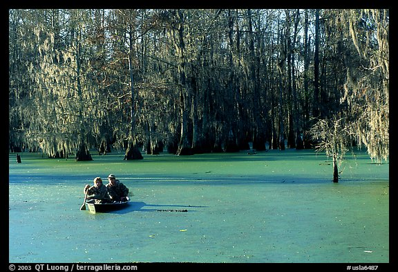 Boat on the swamp, Lake Martin. Louisiana, USA (color)