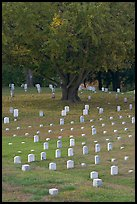 Cemetery, Vicksburg National Military Park. Vicksburg, Mississippi, USA ( color)
