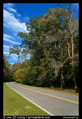 Road turn with trees and Spanish Moss. Natchez Trace Parkway, Mississippi, USA (color)