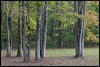 Trees in fall. Natchez Trace Parkway, Mississippi, USA ( color)