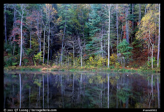 Trees in fall colors reflected in a pond, Blue Ridge Parkway. Virginia, USA (color)